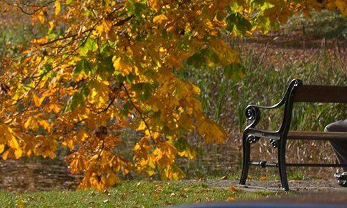 Ældre mand på bænk i parkens gule efterårsløv.